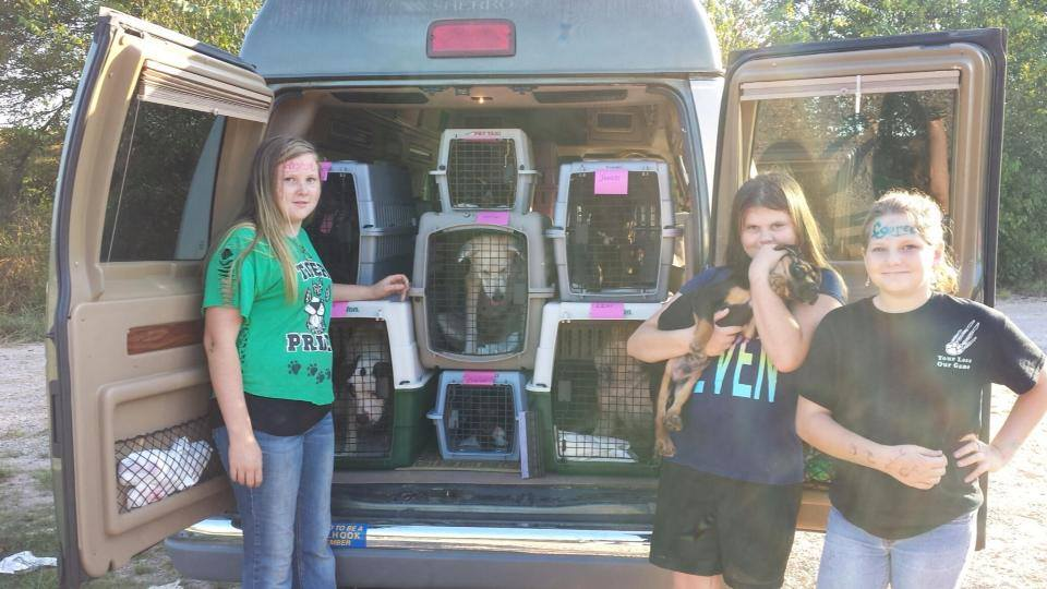 Transport of HAA Dogs in the News